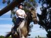 camelot-riding-apr04