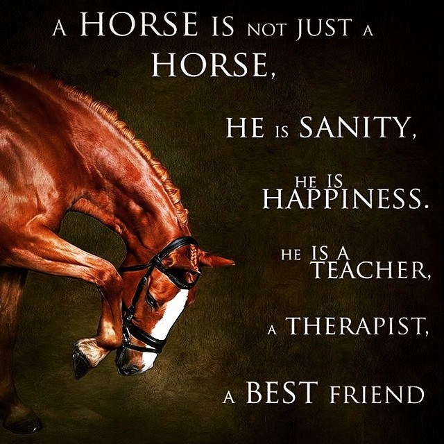 Horsy Quote Aug 2015