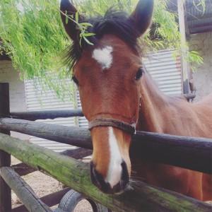 camelot horses 1