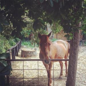 camelot horses 3