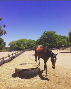 camelot horses 4