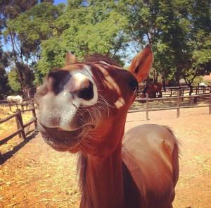 camelot horses 5