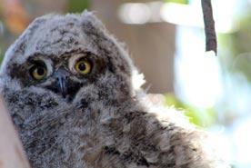 dec14-owl